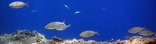 dubrovnik-scuba-diving1