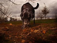 truffle-search-istria-truffle-tour