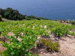 private-wine-tour-peljesac-croatia